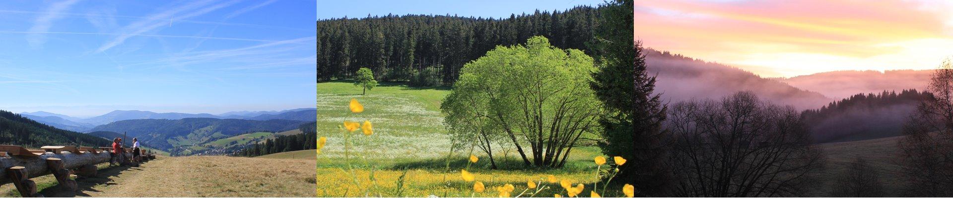 Collage: Stuebenwasen + Blumenwiese beim Ferienhaus + Morgenrot im Jostal / Griesbachhof-Schwarzwald