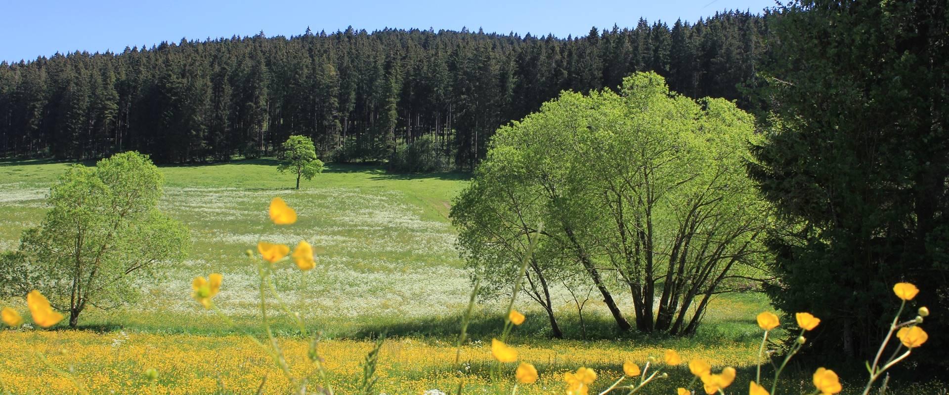 Blumenwiese beim Ferienhaus / Griesbachhof-Schwarzwald
