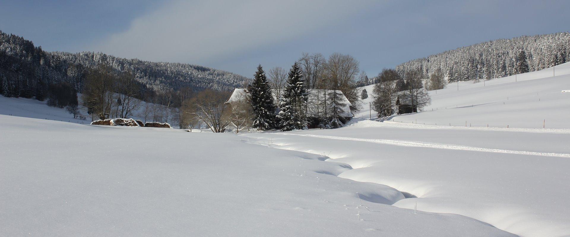 Schildwende mit Griesbachhof im Winter / Griesbachhof-Schwarzwald