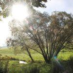 Ferienhaus Außenbereich im Sommer: Morgensonne vom Rasen der Südseite aus