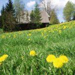 Ferienhaus Außenbereich im Sommer: Löwenzahnwiese vor dem Häusle