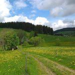 Griesbachhof und Ferienhaus umgeben von Weiden und Blumenwiesen