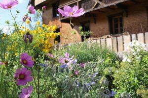Sommerblumen im urigen Bauerngarten vor dem Griesbachhof