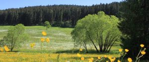 Malerische Blumenwiese vor dem Ferienhaus