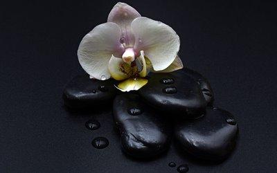 Freizeit Attraktion Erlebnisbox: heiße Steine mit Orchidee