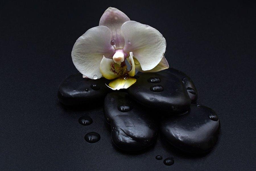 Freizeit Attraktion: heiße Steine mit Orchidee