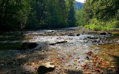 Natur Attraktion Erlebnisbox: die Wutach im Schwarzwald