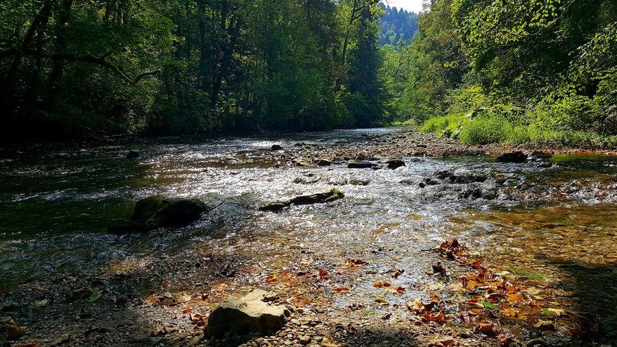 Natur Attraktion: die Wutach im Schwarzwald