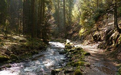 Natur Attraktion Erlebnisbox: die Wutachschlucht im Schwarzwald