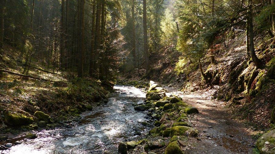 Natur Attraktion: die Wutachschlucht im Schwarzwald