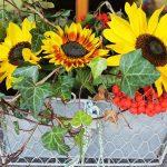 Herbstliche Blumendeko mit Sonnenblumen, Efeu und Vogelbeeren vor dem separaten Hauseingang zur Ferienwohnung