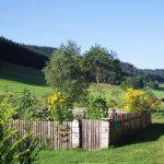 Griesbachhof: Hofgarten mit Jungvieh
