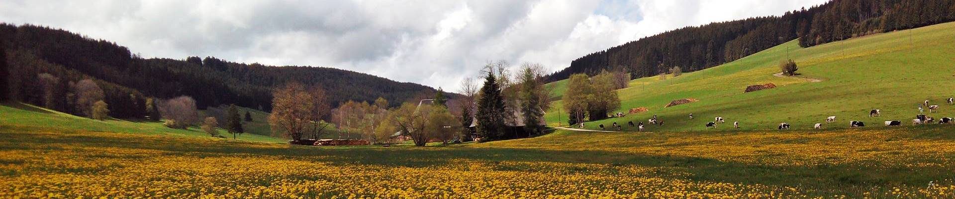 schildwende-loewenzahn-hof-ferienhaus-Griesbachhof-Schwarzwald_400px