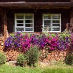 Blumenschmuck_Ferienhaus_Griesbachhof-Schwarzwald