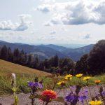 Landschaft Wiesental__Griesbachhof-Schwarzwald