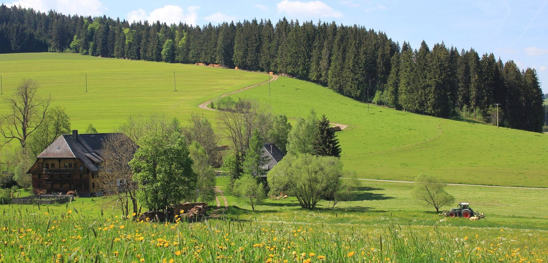 Sommerwiese_Griesbachhof-Schwarzwald